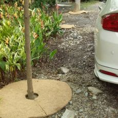 Biodegradable mulch mats for trees