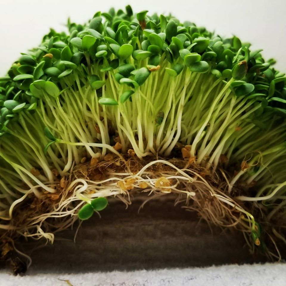 Grow mats for microgreens