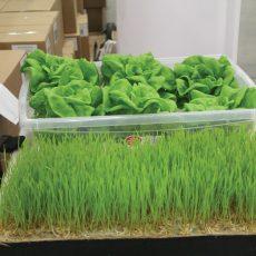 Hydroponic grow mats