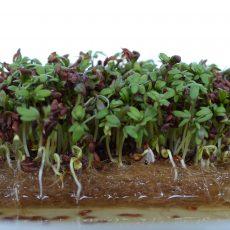 Hydroponic grow mat