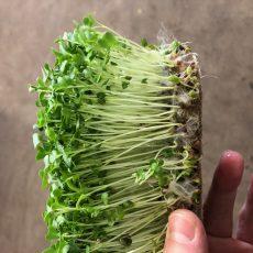 Microgreens hemp mat