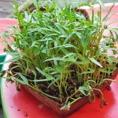 Microgreen hemp mat