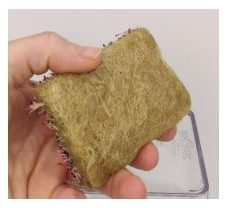 Hemp microgreen mats